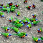 Magnetic Island: parada imperdível na Costa Leste da Austrália