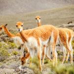 Viagem ao Peru: passo a passo para você planejar sua viagem