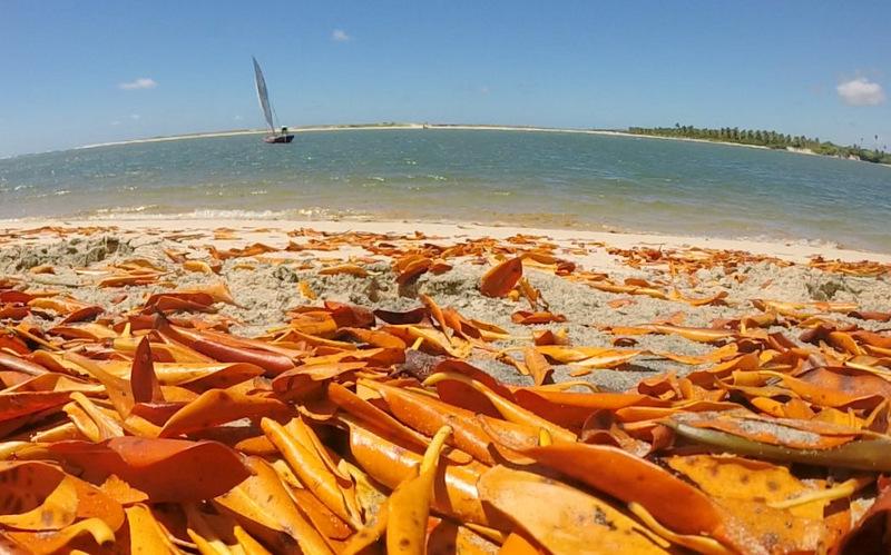 O que fazer em Pipa: conhecer a praia de Baía Formosa