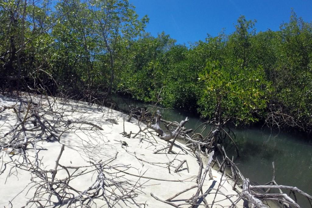 Mangue Praia da Restinga Barra de Cunhaú RN