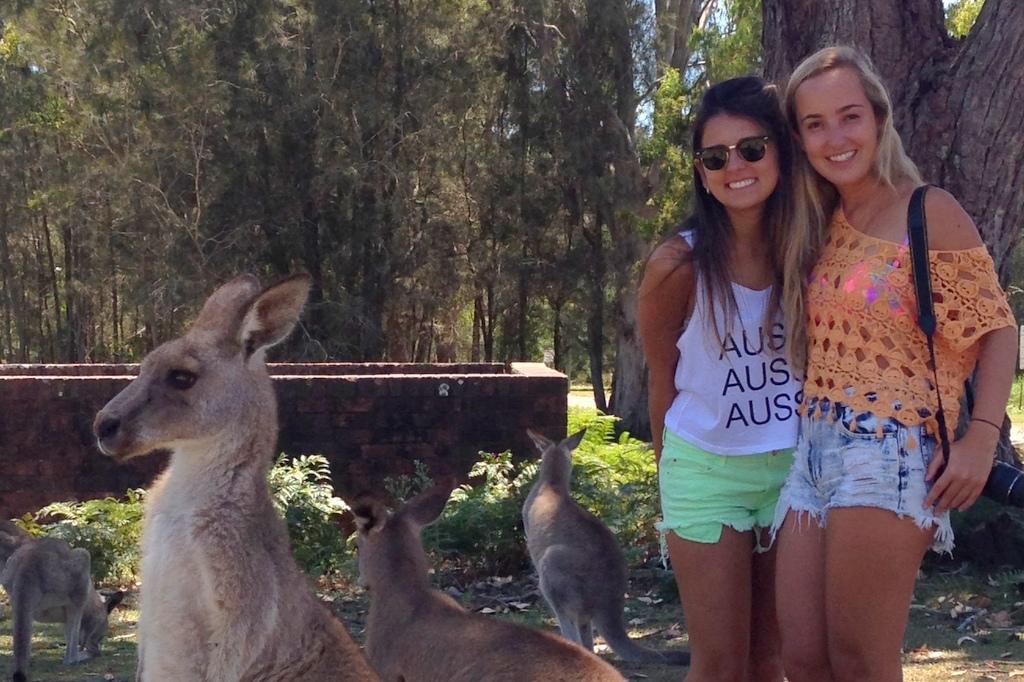 o que conhecer na australia: cangurus em morrisset