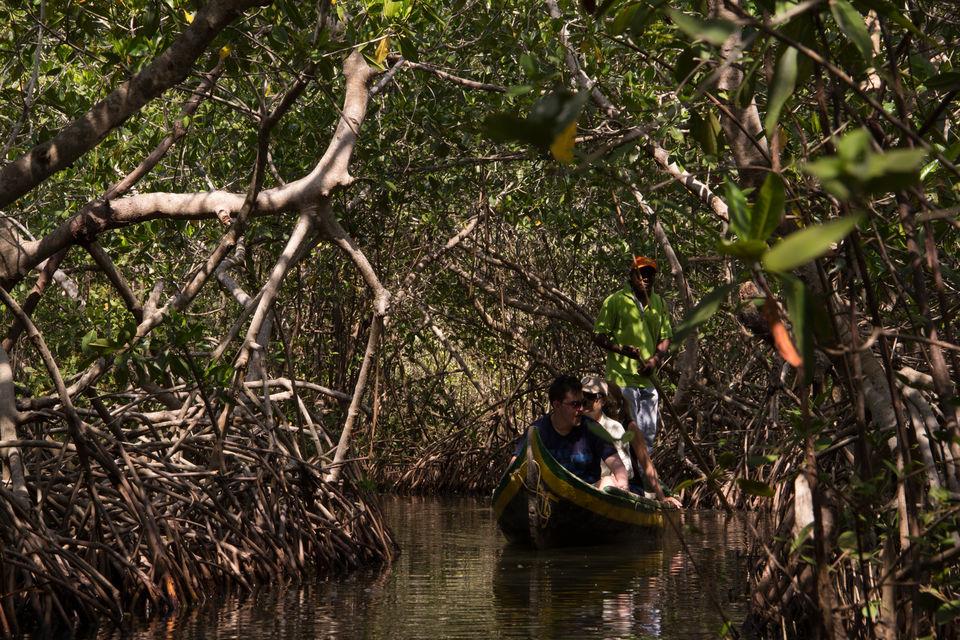 Passeio de canoa pelos manguezais de Cartagena