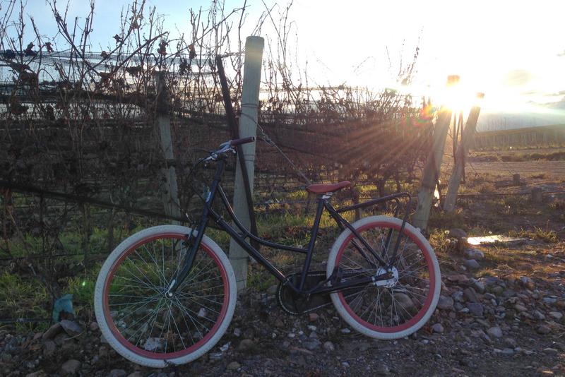 bicicleta vinícola casa de uco