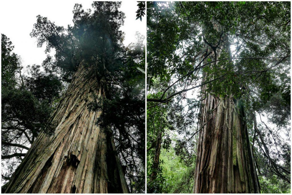 Bosque de los Alerces Milenários