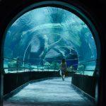 Conhecendo o AquaRio, o Aquário Marinho do Rio de Janeiro