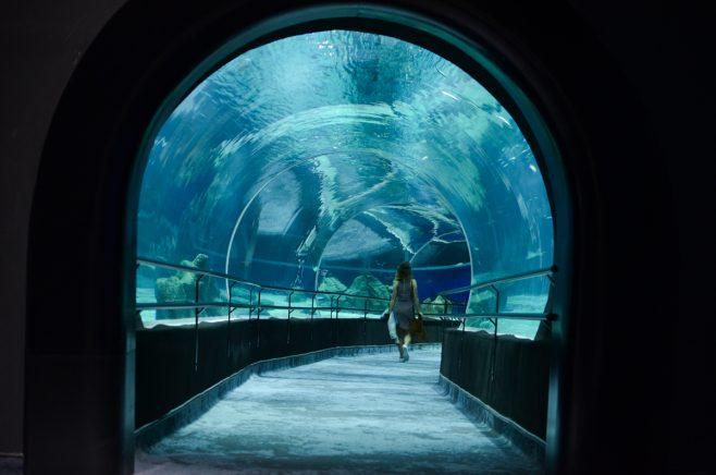 Resultado de imagem para aquario rio de janeiro