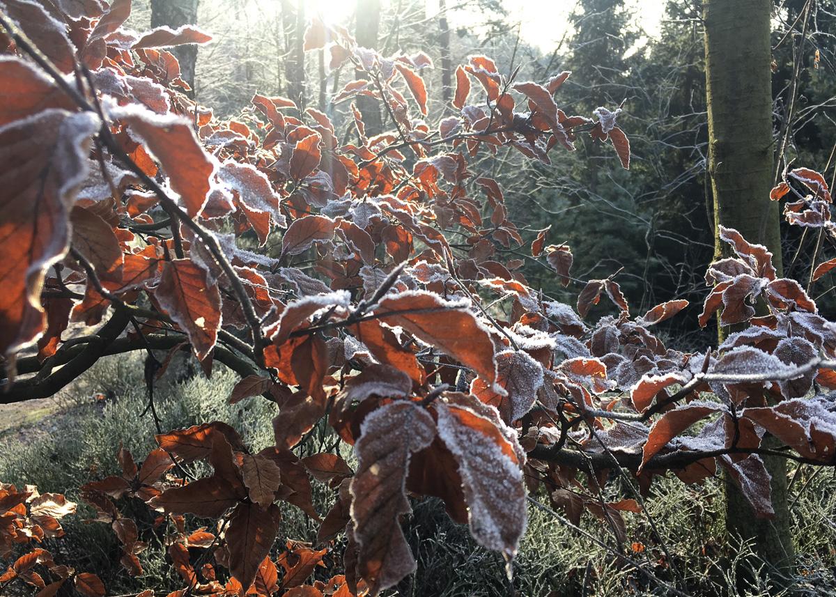 parque nacional bohemian switzerland