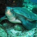 Mergulho em Búzios: uma experiência imperdível na Região dos Lagos