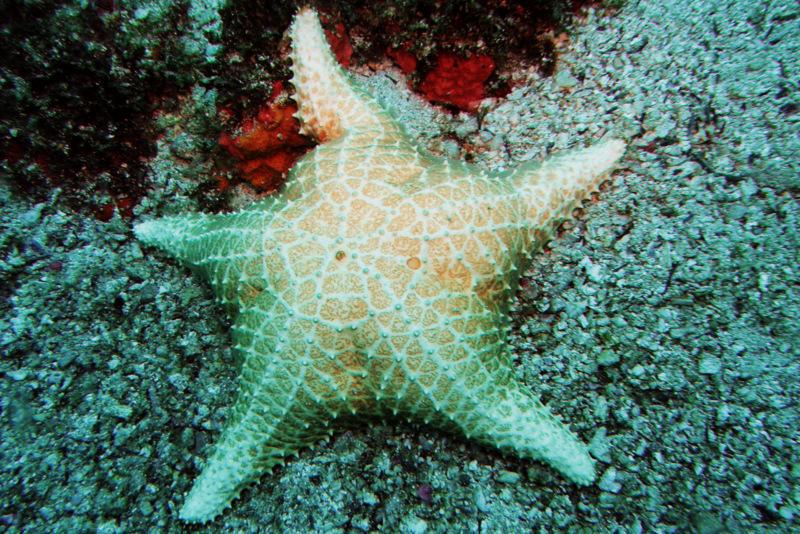 Estrela do Mar Búzios