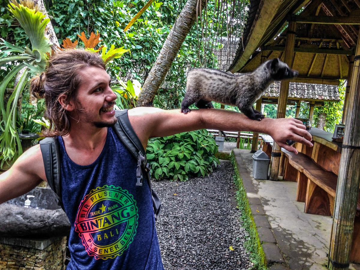 animais de Bali