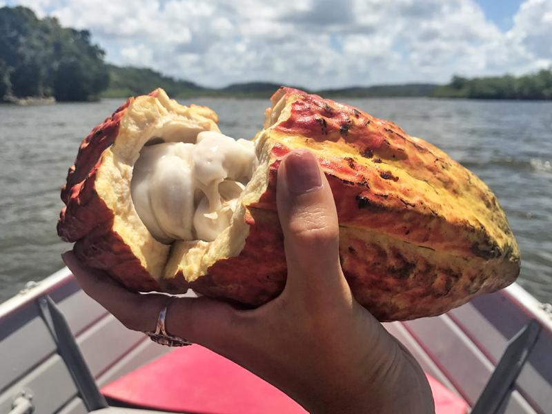 a fruta cacau típica de Itacaré