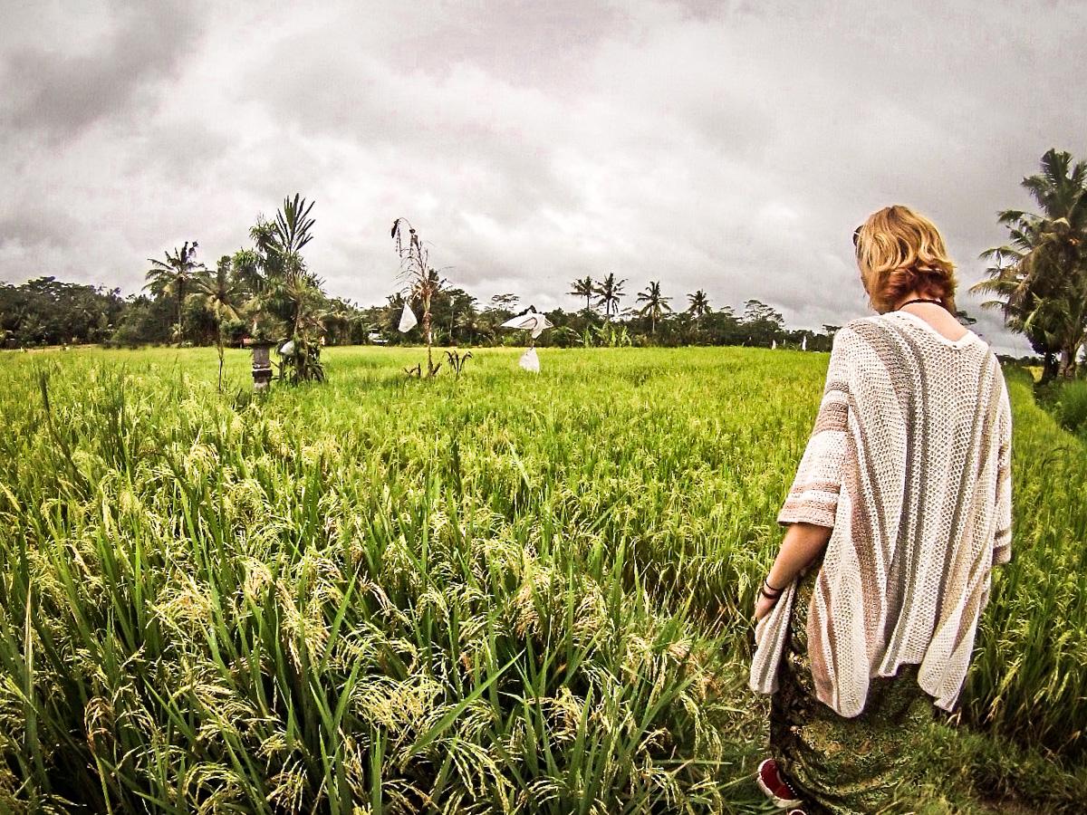 Campos de arroz, Ubud, Bali
