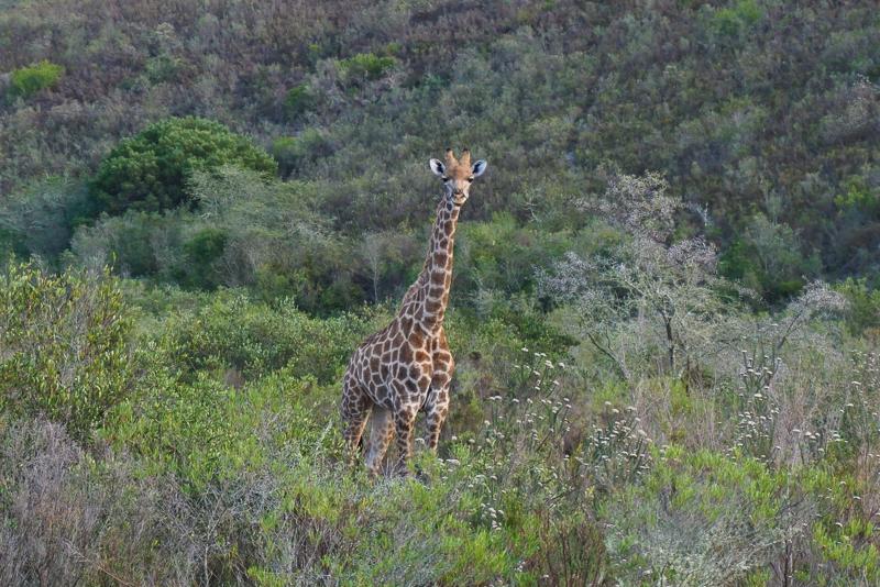 Viagem para a África do Sul: Gondwana Game Reserve