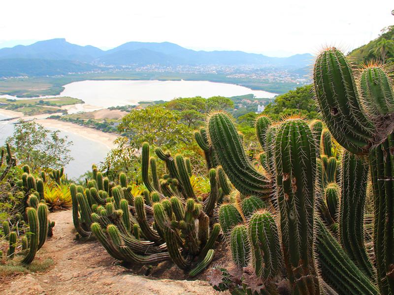 Morro das Andorinhas, Niteroi