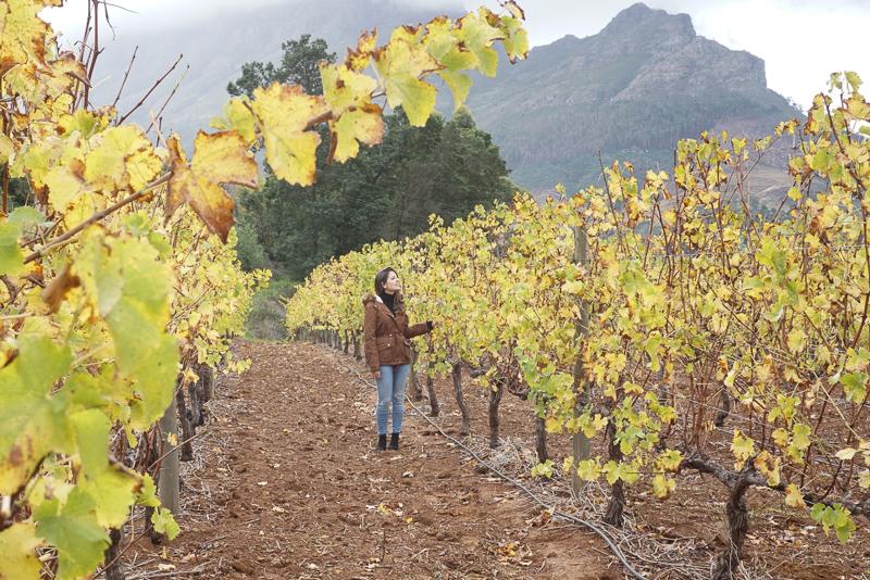 caminho da plantação na Stellenbosch Winelands