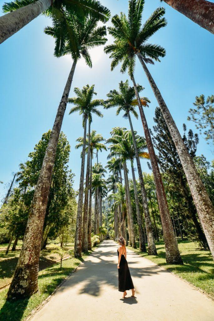 Palmeiras do Jardim Botânico do Rio de Janeiro