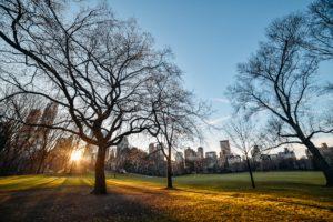 Parque em Nova York