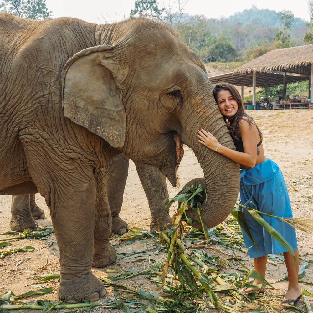 Passeio elefantes Tailândia