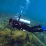 Mergulho em Arraial do Cabo: conheça a vida marinha deste paraíso