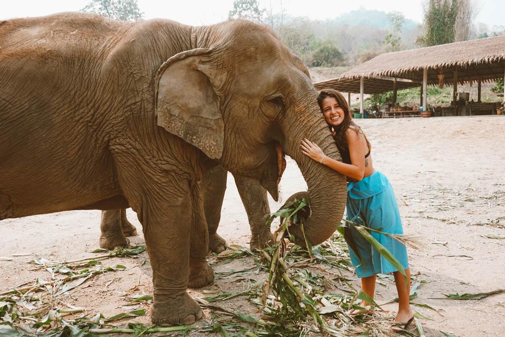santuário elefantes tailândia