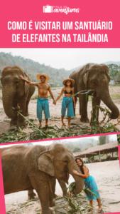 santuário de elefantes na tailândia