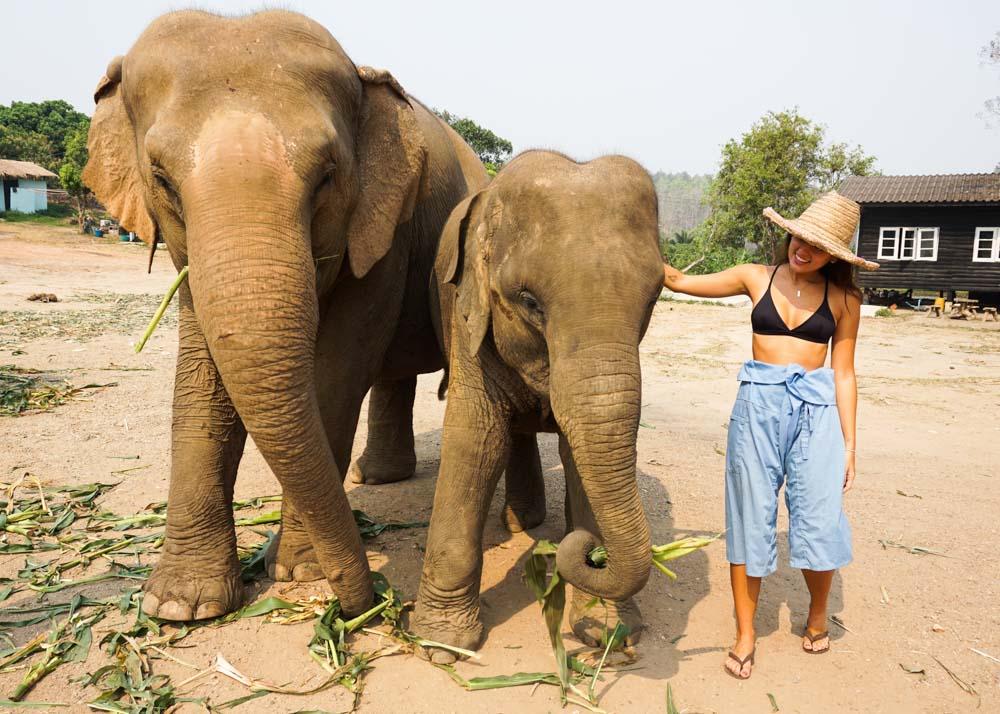 santuário de elefantes