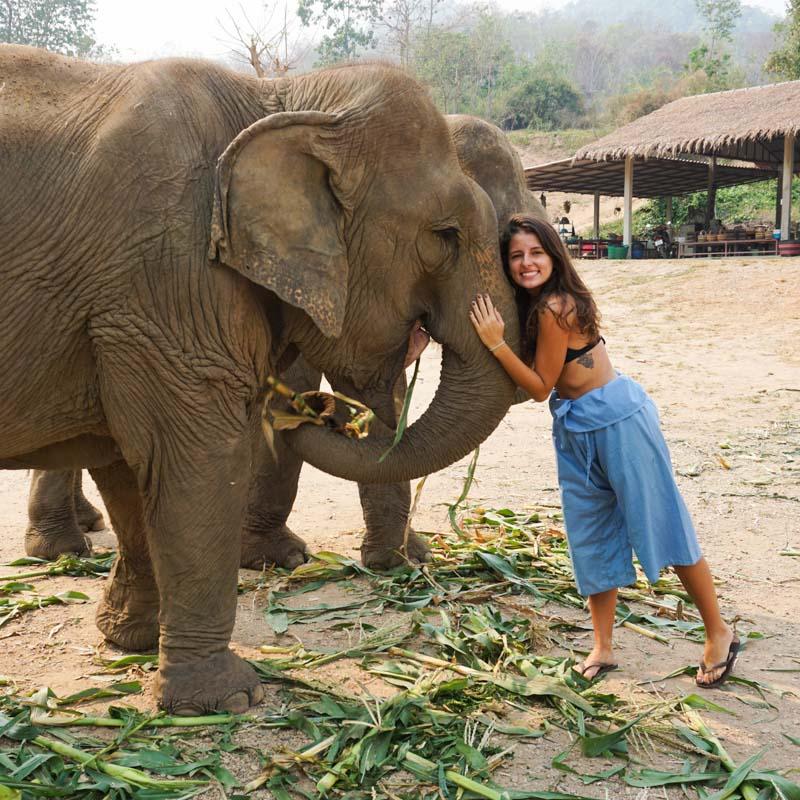 seguro viagem animais selvagens tailândia