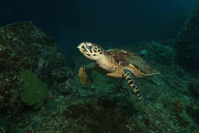 mergulho-tartaruga