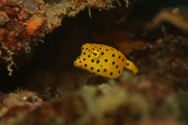 peixe-mergulho-tailândia