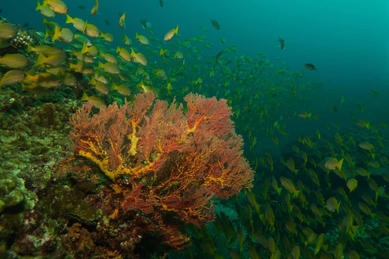 mergulho na tailandia