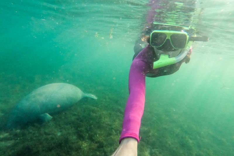 mergulho com peixe boi