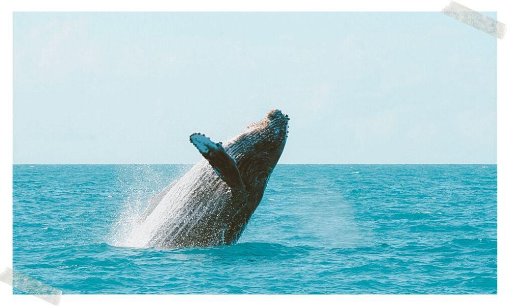 onde avistar baleias no brasil