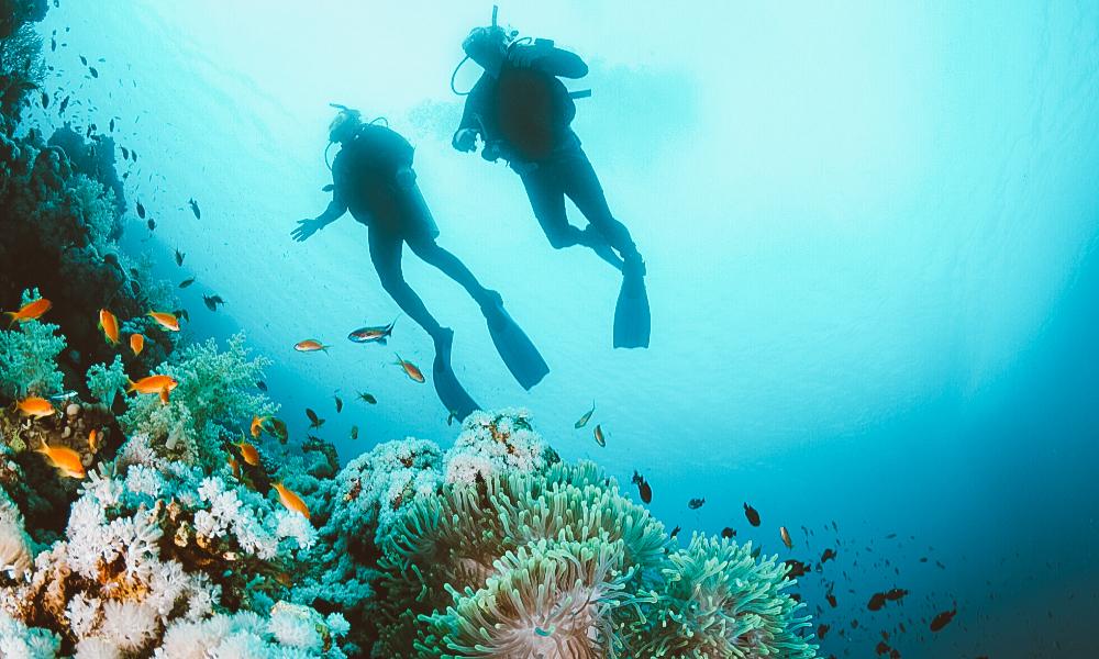 para onde viajar em fevereiro para mergulho