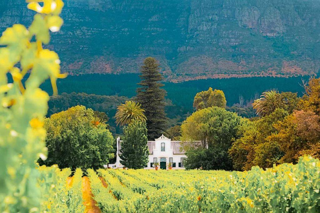 constantia winelands