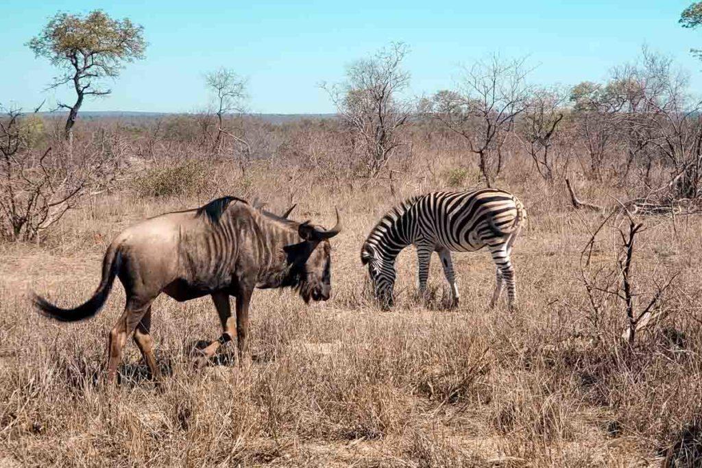 animais no safari na africa do sul