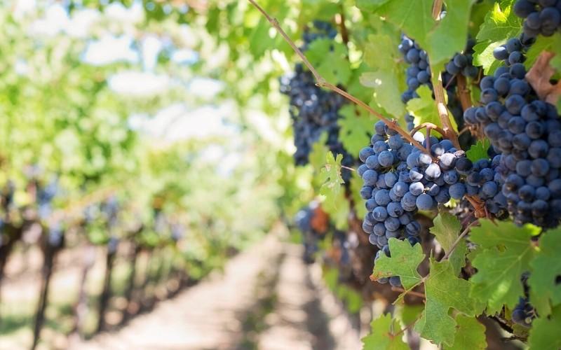 vinicolas africa do sul