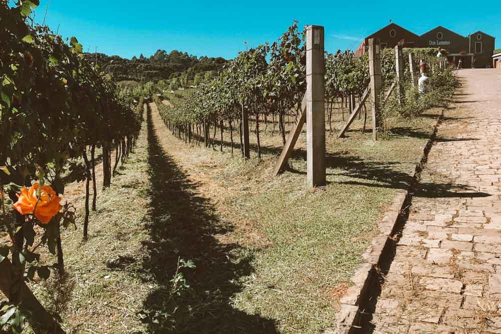bento gonçalves vinícolas