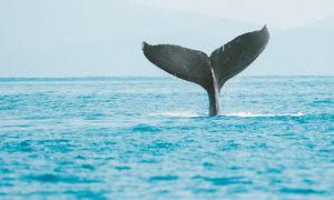 Costa das Baleias (Bahia): principais atrativos, roteiro e dicas de viagem