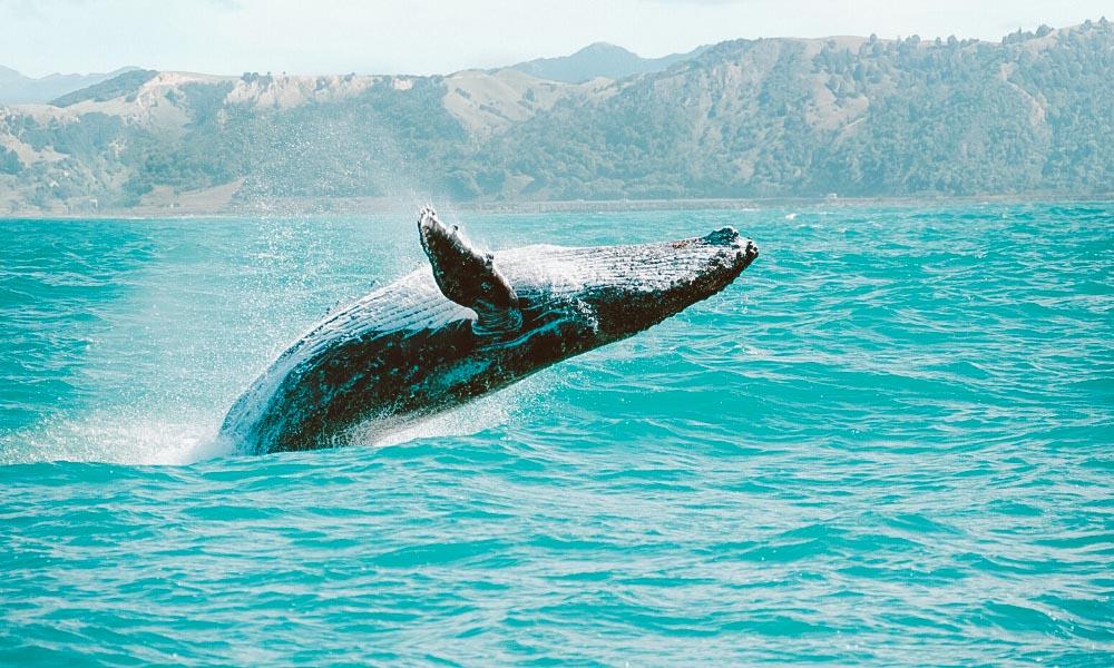 garopaba sc baleia