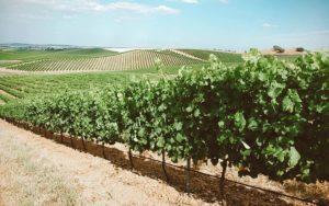 Vinícolas em Portugal: roteiro e dicas das melhores vinícolas