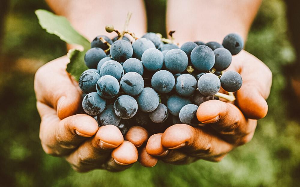 vinicolas em portugal uvas
