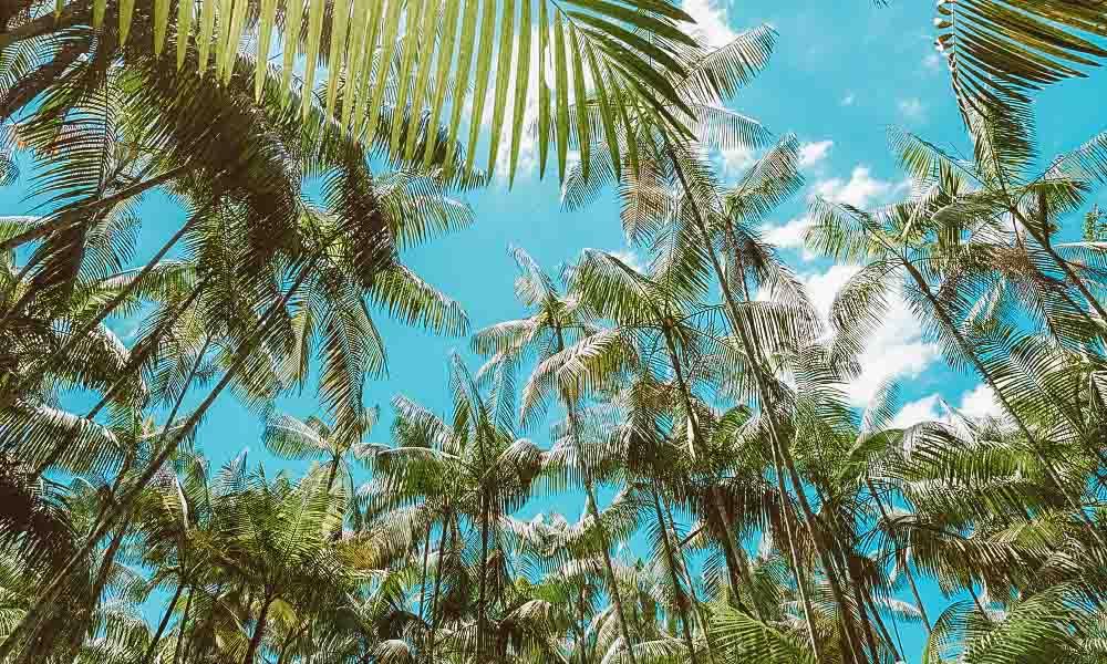 melhores resorts do brasil arvores