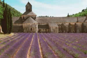 Campos de lavanda da França: 10 dicas imperdíveis para planejar a sua visita